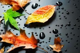 autunnodivino