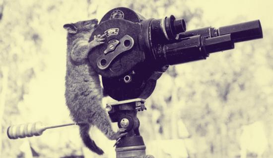 opossum-movie-camera